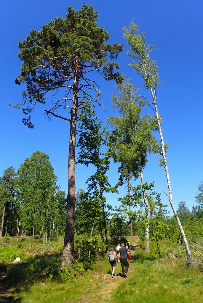 Under høye trær på Tunsbergleden.